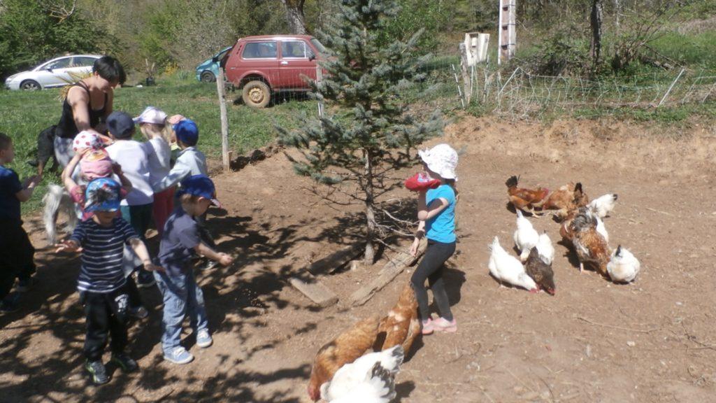 Enfants qui jouent avec les poules lors du camp à la ferme